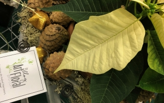 Des idées pour revisiter le poinsettia comme plante de saison! Johanne Martel, Isabel Harrisson